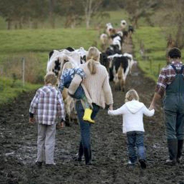 Best 25 farm layout ideas on pinterest horse farm for Hobby farm plans