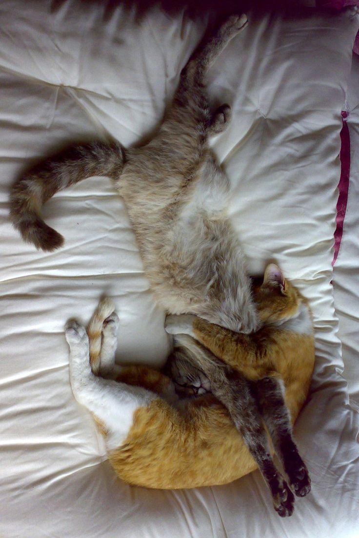 Sleep Over Buddies