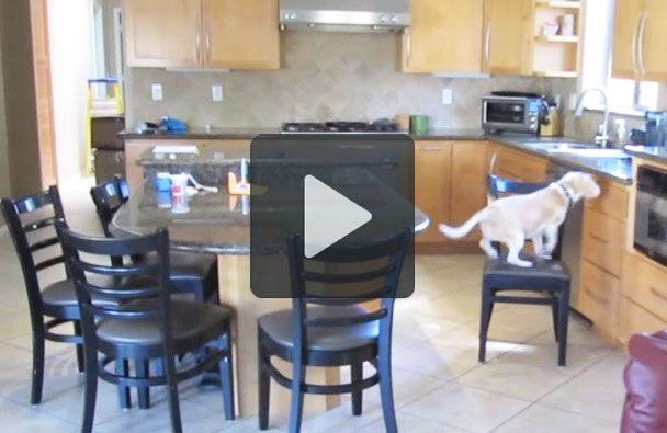 Vi siete mai chiesti cosa architetta il vostro cane mentre siete fuori