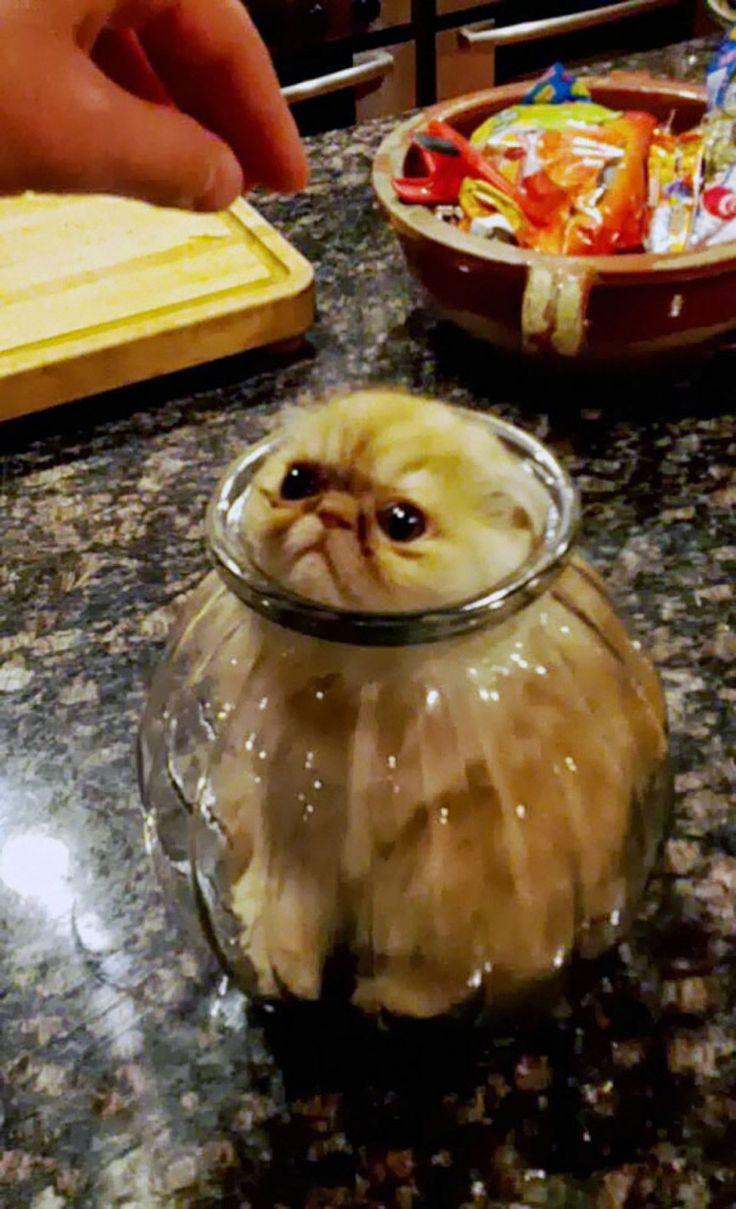 """Vingt chats qui regrettent instantanément leurs mauvais choix de vie, """"j'ai fait le con""""   Buzzly"""