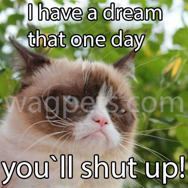 I Have A Dream That One Day You Ll Shut Up Funny Grumpy Cat Memes Grumpy Cat Humor Funny Animal Jokes