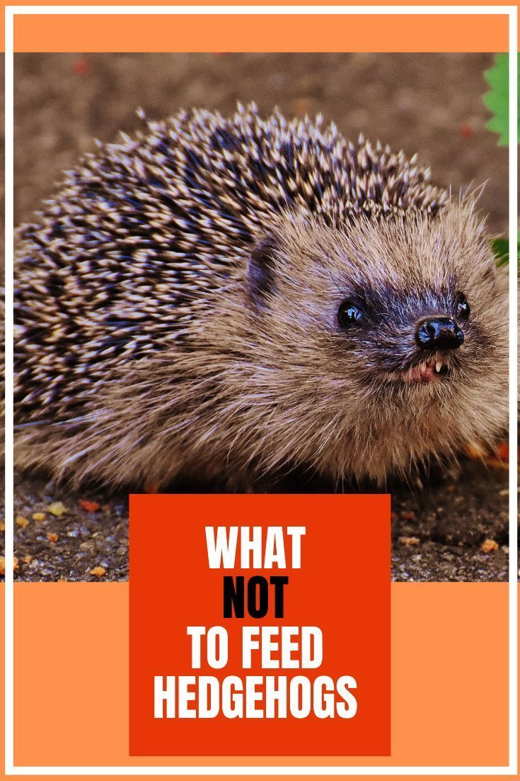 12 Wildlife Feeding Myths Uncovered With Images Wildlife