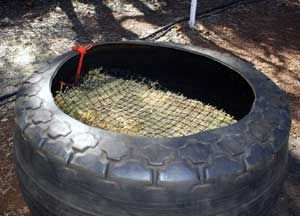 """Natural Horse World Home - slow feed hay feeder for horses made using a """"rag wall"""" tire"""