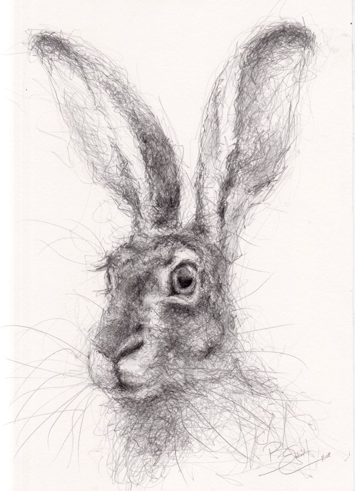 new stock original a4 wildlife drawing of a hare animal art by belinda elliott