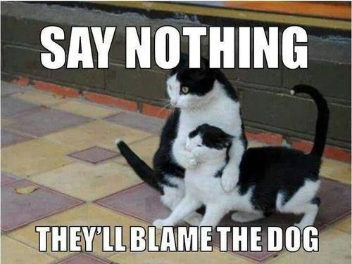 Say Nothing, They'll Blame The Dog,  Click the link to view today's funniest pictures!