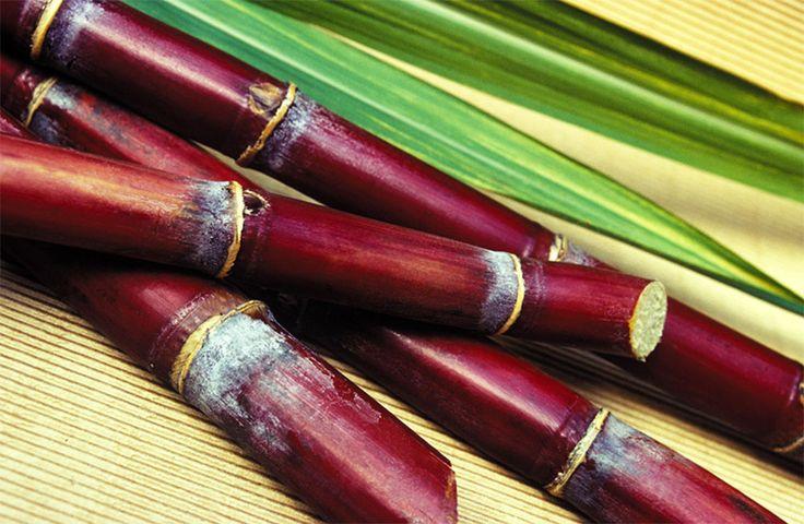 La canne à sucre http://www.naturalia.fr/dico-canne-a-sucre-4-156.htm