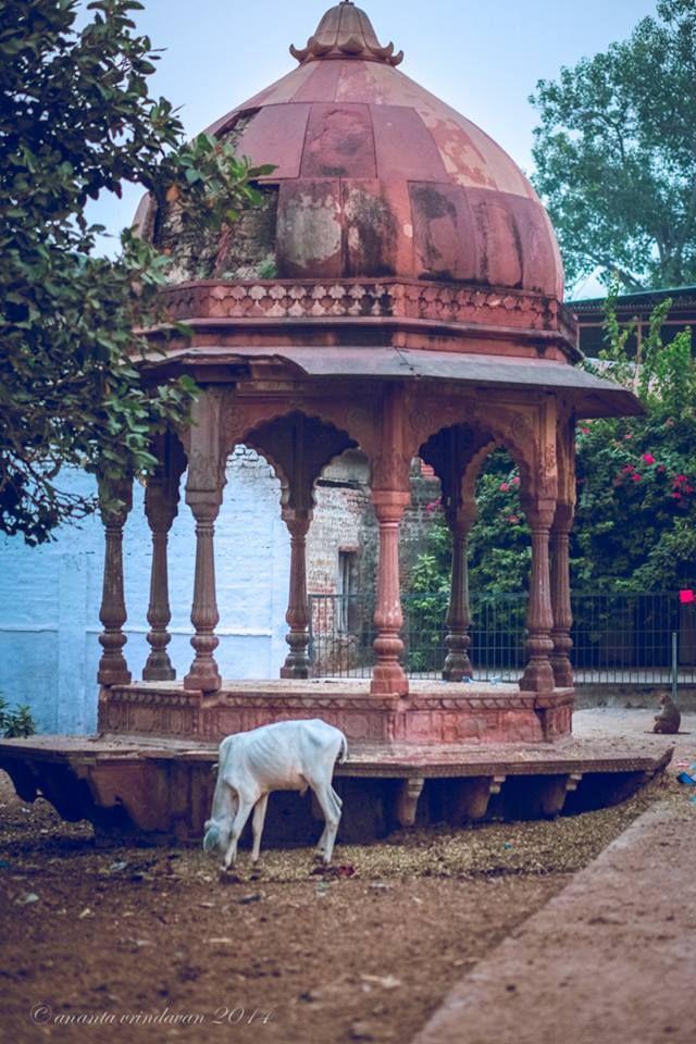 Vrindavan, India ღϠ₡ღ✻↞❁✦彡●⊱❊⊰✦❁ ڿڰۣ❁ ℓα-ℓα-ℓα вσηηє νιє ♡༺✿༻♡·✳︎· ❀‿ ❀ ·✳︎· SUN Aug 21, 2016 ✨ gυяυ ✤ॐ ✧⚜✧ ❦♥⭐♢∘❃♦♡❊ нανє α ηι¢є ∂αу ❊ღ༺✿༻♡♥♫ ~*~ ♪ ♥✫❁✦⊱❊⊰●彡✦❁↠ ஜℓvஜ