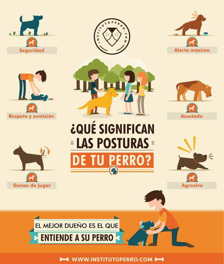 posturas_perro1