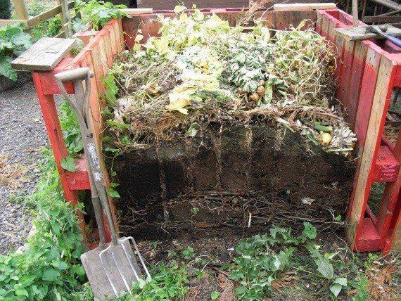 Компост за 6 недель... Компост – настоящее огородное золото. Он улучшает структуру почвы, регулирует поступление воды и питательных веществ в растения, кислотность почвы. Качественный компост, внесенный по пригоршне на растение, удваивает урожай и разительно повышает качество овощей. Кроме того, как показали исследования немецких ученых, он защищает растения от болезней. И если подойти к этому процессу с умом, по-хозяйски, то на созревание компоста уйдет не год, а всего 6-8 недель. Прежде…