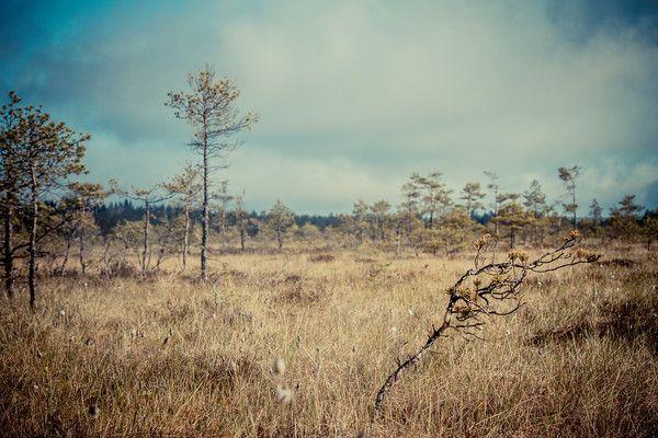 KAKOSSUO Kakossuo on isohko suoalue Vaskiolla. Sinne pääsee mm Turilantieltä.  Kustaan Kaivannon nimetön tienhaara löytyy navigaattorilla noin Turilantie 466 kohdilta ja on varustettu mustalla opastekyltillä jossa lukee Kustaan Kaivanto.  http://www.naejakoe.fi/luontojaulkoilu/kakossuo/ #Salo #VisitSalo #VisitFinland #Nähtävyydet #Sightseeing #Matkailu #Retkeily #Seikkailu #Adventure #Loma #Pyöräily #Ulkoilu #natureaddict