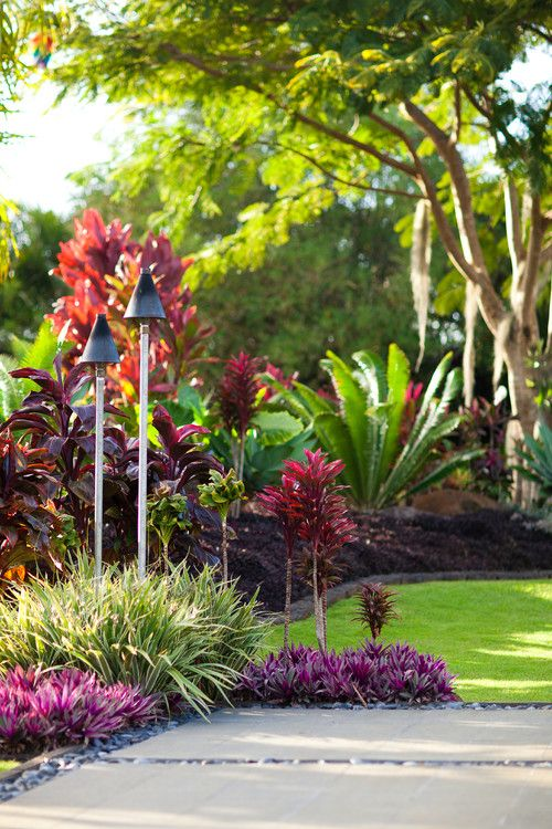 The red higher plant  - Cordyline Fruticosa (Ti Plant).  The lower pink and purplish ground cover -  Tradescantia Spathacea (Moses-in-a-Basket, Oyster Plant, Christ in the Cradle, Boatlily)