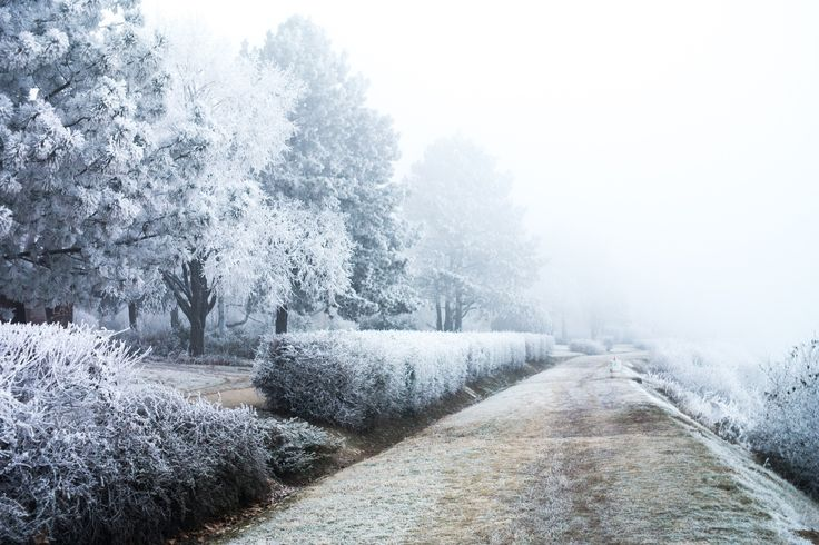 Cold Winter Morning - A freezing, misty January morning. Snow hasn't fallen yet, but everything is covered with rime.