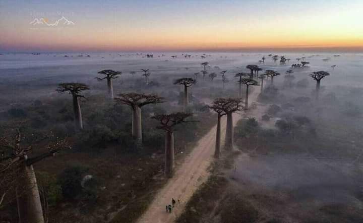 Madagascar Tours & Car rental company! Book your tour for madagascar and discover baobabs tree, lemurs, fossa....