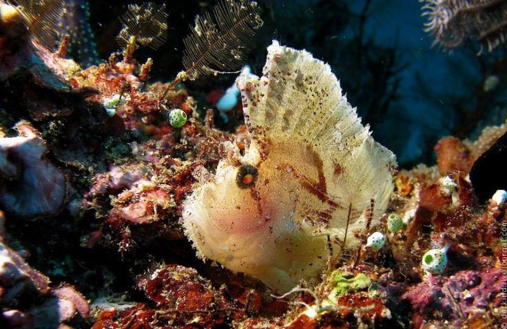 удивительные морские существа