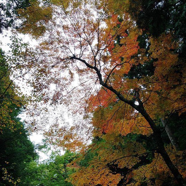 【bokunara】さんのInstagramをピンしています。 《雨の原始林。 紅葉は少し深まる。 黄緑と赤と橙と黄と深緑。 11/26(土)神山をきく世界遺産春日山原始林さんぽ 彩編 まだまだ参加者募集中です。 ■お申し込み方法 奈良市観光協会の申し込みページよりお願いします。 http://narashikanko.or.jp/genshirin/  #エコツアー #トレッキング  #自然 #森 #色 #五感で感じる #秋 #キノコ #世界遺産 #春日山原始林 #奈良 #癒し #オーガニック #日本の伝統色 #紅葉》