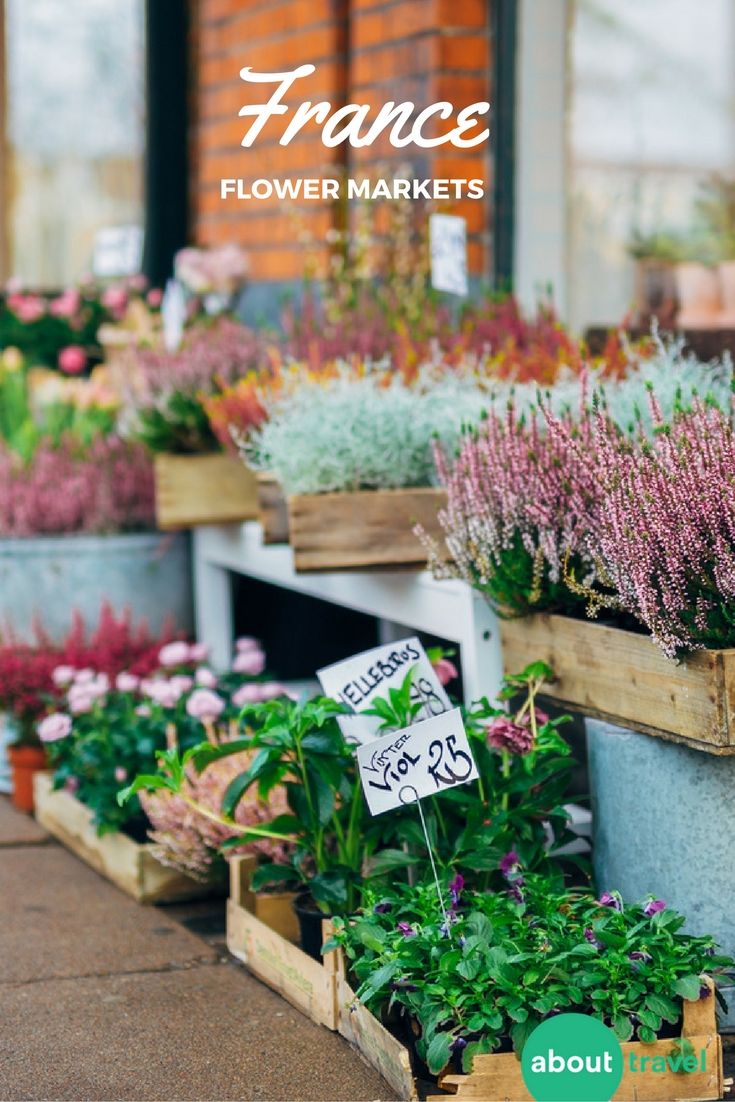 Take a walking tour of the flower and vegetable farmer's markets in Nice, France. Check out our guide to the area and book your trip with your family and friends!
