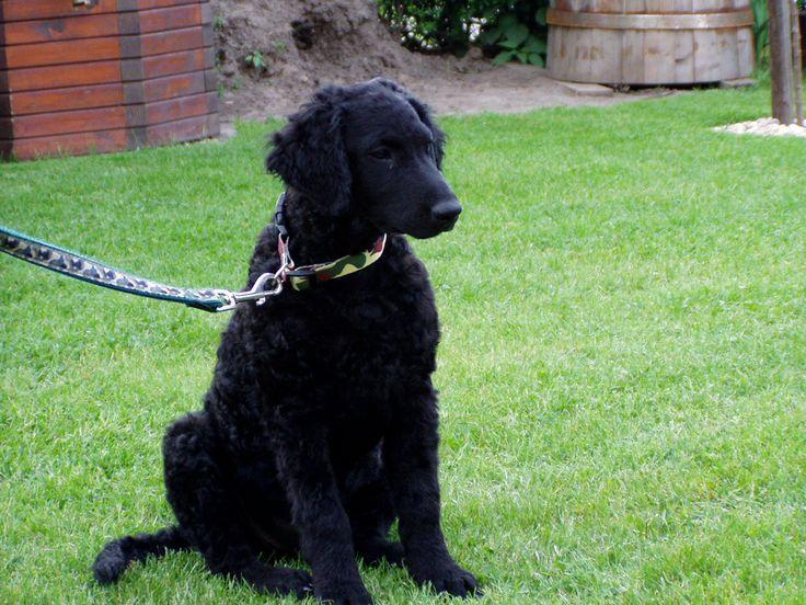 Výcvik :: Ballgine - výcvik psů
