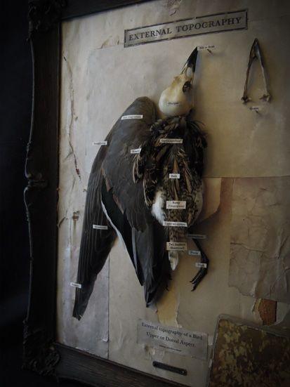 EXTERNAL TOPOGRAPHY #01 - BIRD / 外部地理学 #01 - 鳥類