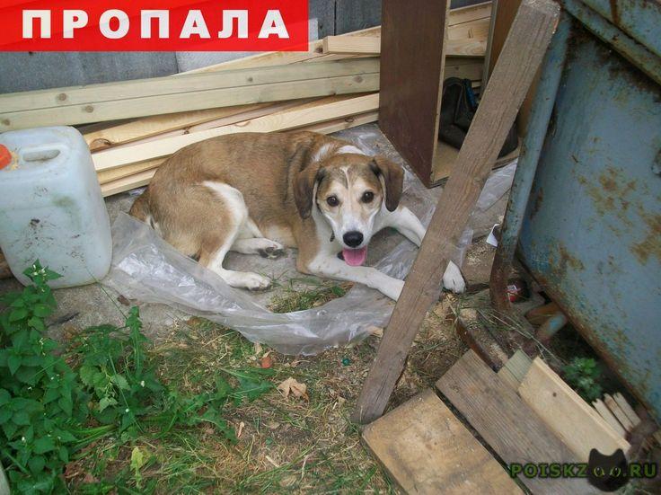 Пропала собака кобель рыжий пёс, метро академическая г.Москва http://poiskzoo.ru/board/read29426.html  POISKZOO.RU/29426 Москва, м. Академическая ПОЗАВЧЕРА, .. в районе .. часов во дворах рядом с метро пропал пёс Ральф. Кобель, рыжий, уши висячие, хвост купированный, небольшого роста (по колено), живот, лапы, шея и морда белая, на голове белая стрелочка. Был в коричневом ошейнике. Метис, но внешне напоминает бигля. Всех, кто видел, кто может быть подобрал или знает, где сейчас находится…