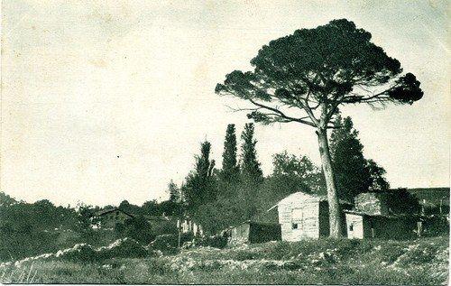 Çamlıca, 1910 civarı
