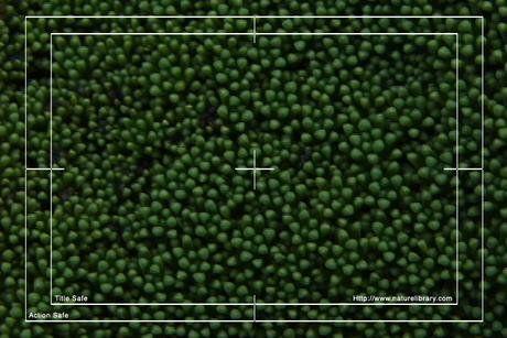 Royalty Free Stock Footage: Vegetation: NL00156