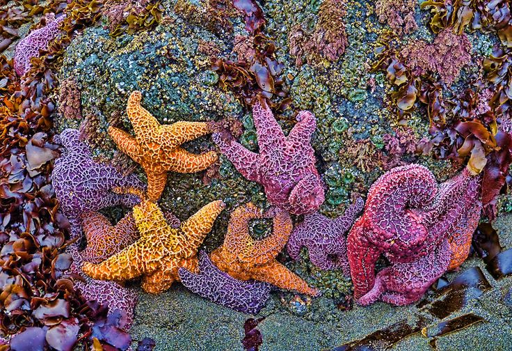 Colorful starfish in Gold Beach, Oregon. Photo by quickeye. For more photos, visit wunderground.com