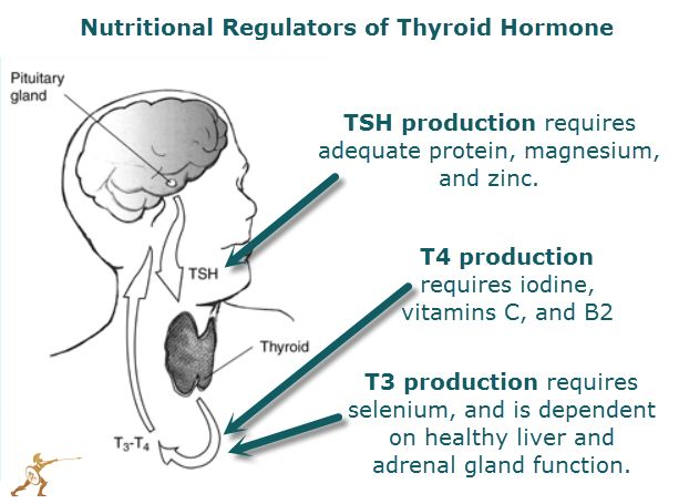 Hypothyroidism Chances are, if you are reading this article, you