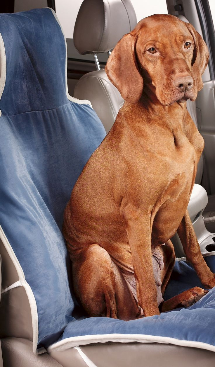 With our Luxury Single Pet Seat Cover, you won't hesistate to take your dog along for a ride.