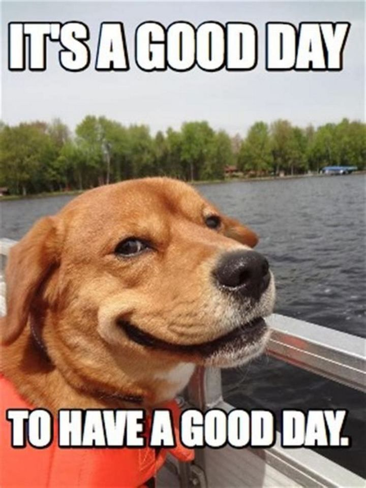 101 Have A Great Day Memes To Wish Someone Special A Good Day Good Morning Animals Good Day Meme Funny Morning Pictures