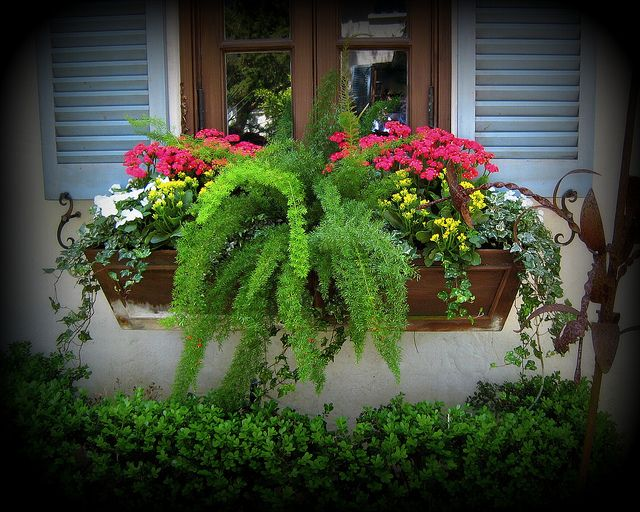 Summer shade window box primitive outdoor decorating - Flower box ideas for summer ...