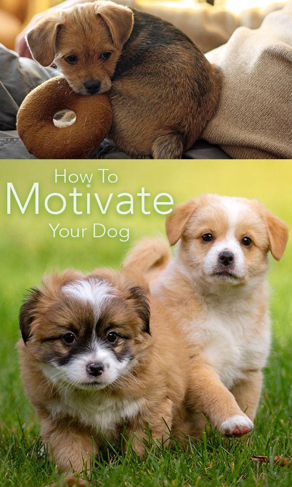 How Do I Spell Good Morning In German : Best dog care training tips tricks images on pinterest