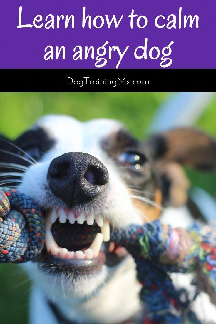 Dog Food Secrets Aggressive Dog Angry Dog Dog Training