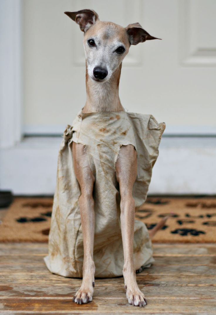 Dress up your pet game - Dobby The Elf From Harry Potter This Dog Is The Perfect Pouch To Dress Up As