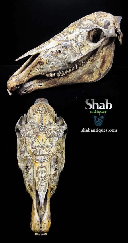 Beautiful and Carved East Timor Horse Skull -