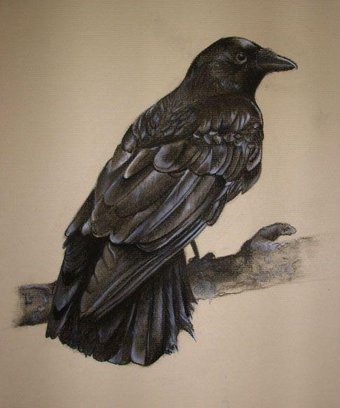 raven crow half man - photo #36