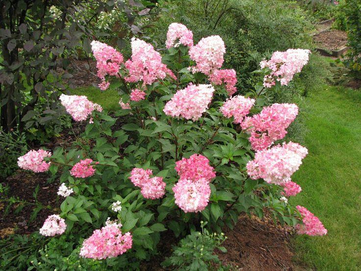pan. Vanille Fraise метельчатая 150-200 см белые-розовые-красные 2 шт