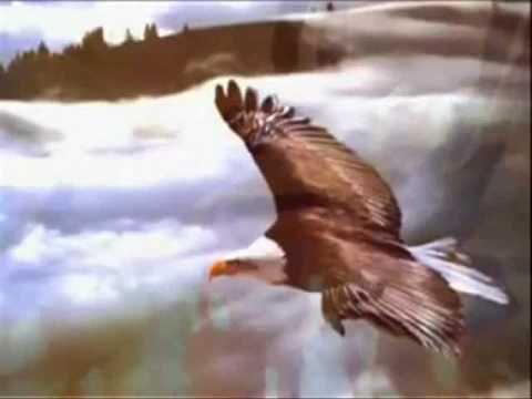 A história de renovação da águia