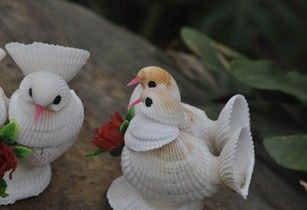 Conch shell coral shells bird shells of small animals conch shell crafts