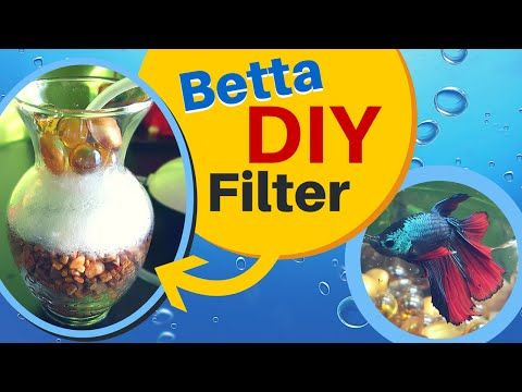 How to make a easy DIY Aquarium Filter for BETTA FISH | Sponge Air Pump Filter - YouTube