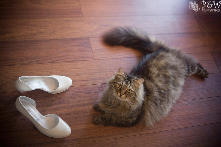Wedding shoes and kitty.