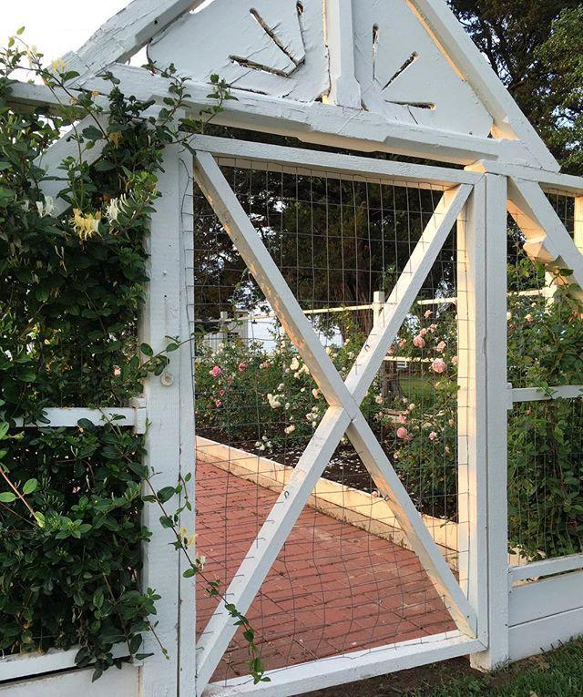 Life on the Farm   Gardening   Roses   The Farmhouse   Chip & Joanna Gaines  