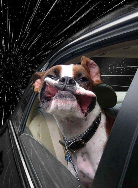 Capitan Dog, cani nello spazio: il fotoritocco #EasyNip