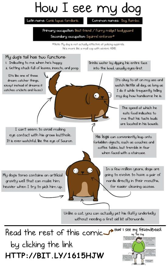 Dogs vs Cats Compare and Contrast Essay
