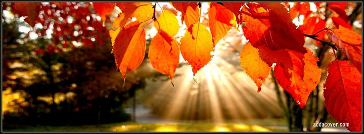 Autumn Facebook Timeline Covers Red Leaves Of Cover Great #Facebook cover image #marketing