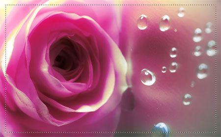 Fiori 013 - Fiori - Foto Artistiche su Tela - Listino prodotti - Digitalpix - Artistic photo - Canvas art - Flower - Home decor - Decorazione casa - interior design ideas - idee design interni