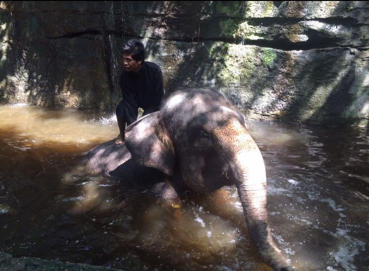 Bali Safari - Gianyar / Ubud