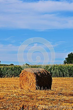 Straw bale on stubblefield in South-West Hungary