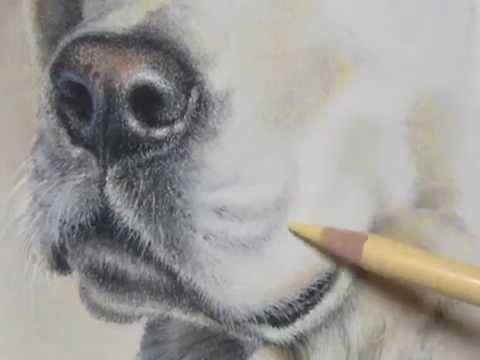 Pastel Painting Demonstration-Labrador Retriever by Roberta Roby Baer PSA