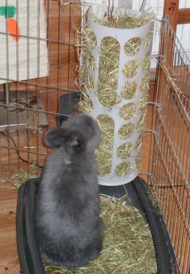 Ikea bag holder as rabbit hay rack. Cheap and smart :)