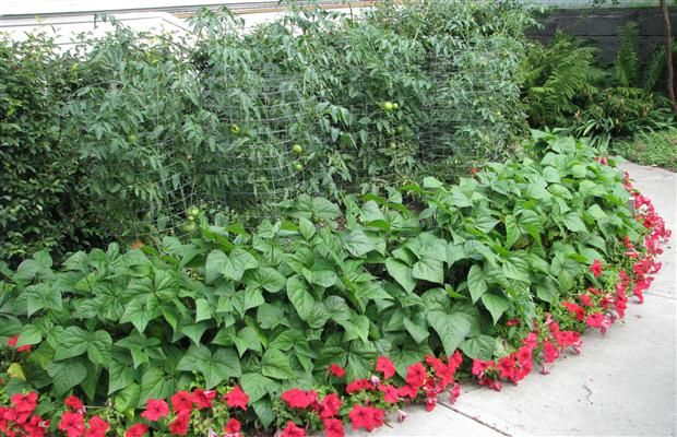 Companion Planting The Real Story With Images Plants 400 x 300